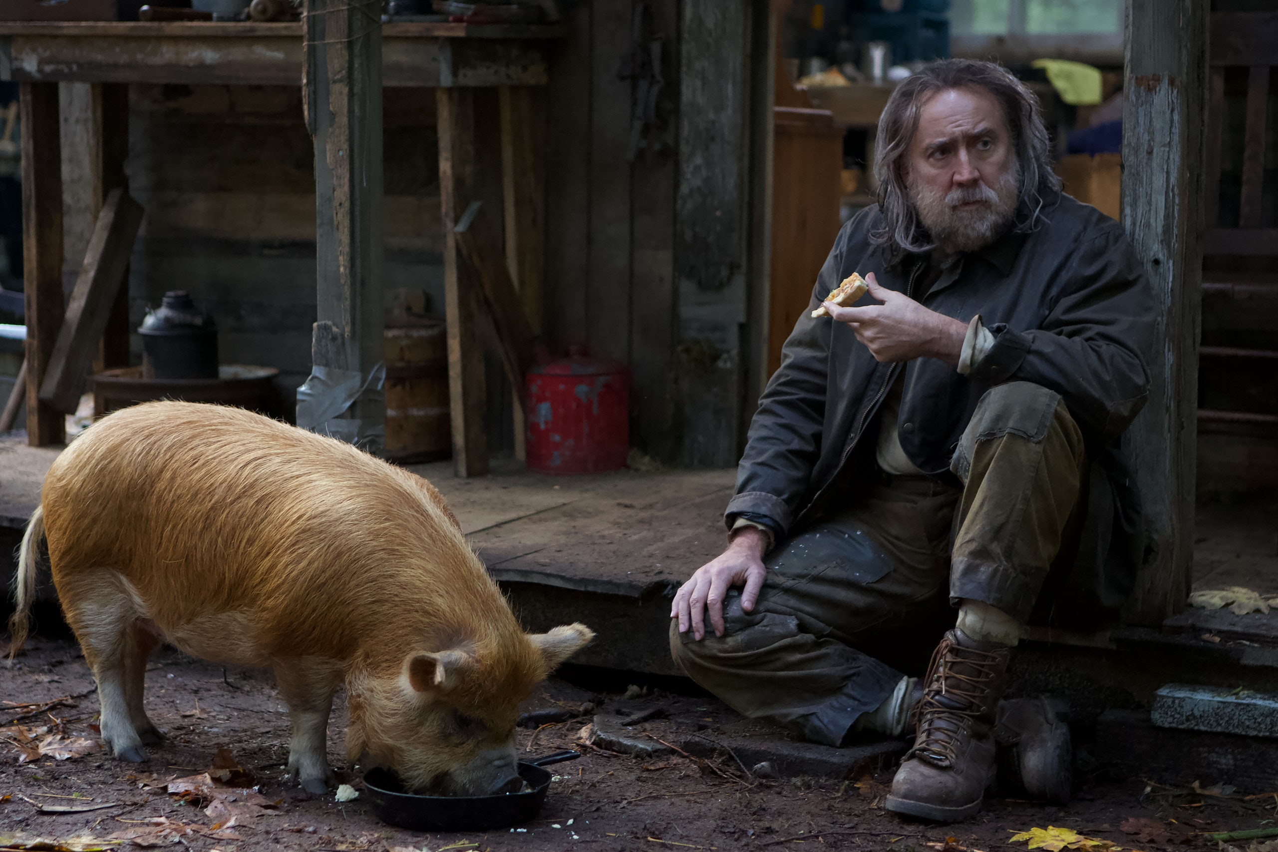 Brody-Pig